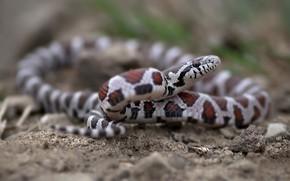 Картинка природа, фон, змея