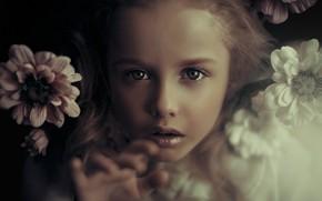 Картинка взгляд, цветы, лицо, девочка
