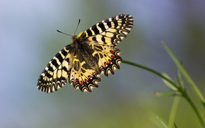 Картинка макро, бабочка, боке
