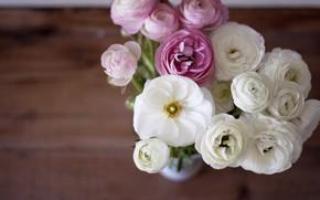 Картинка цветы, букет, ваза, ранункулюс, азиатский лютик