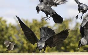 Картинка природа, фон, птицы