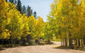 Картинка дорога, осень, лес, деревья, Колорадо, США, осина, Аспен