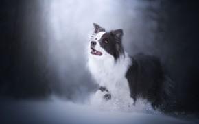 Картинка зима, снег, собака, боке