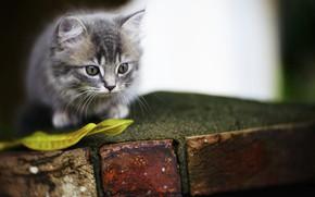 Обои милый, котенок, глазки, фон