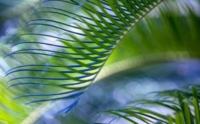 Картинка лист, зеленый, пальма