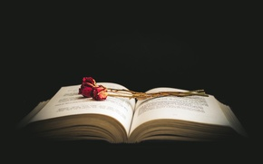 Обои книга, розы, цветы