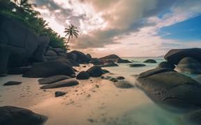 Картинка море, пляж, лето, пейзаж, тропики, пальмы