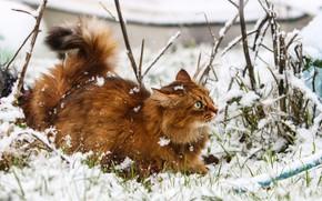 Картинка зима, кошка, снежинки, игра, шерсть