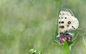 Картинка лето, трава, макро, цветы, природа, бабочка, боке