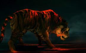 Картинка тигр, фон, хищник, арт