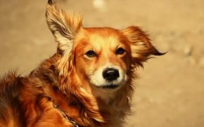 Картинка друг, собака, песик