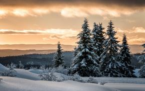 Картинка зима, лес, снег, ели, Норвегия, Лиллехаммер, Lillehammer