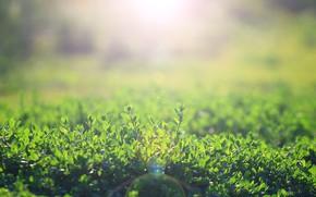 Картинка зелень, лето, травка, блики от солнца