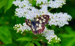 Картинка Макро, Весна, Бабочка, Spring, Цветение, Macro, Butterfly, Flowering