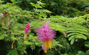 Картинка цветы, природа, листики