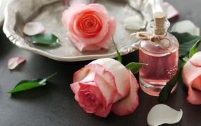 Картинка духи, лепестки, rose, pink, petals, розовые розы, spa, oil