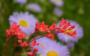 Картинка Цветы, Весна, Flowers, Spring