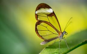 Обои макро, лист, бабочка