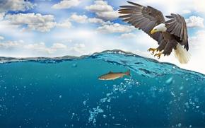 Обои море, небо, вода, облака, пузырьки, птица, крылья, рыба, перья, клюв, когти, охота, белоголовый орлан