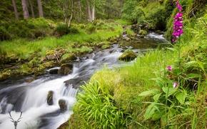 Обои зелень, лес, лето, трава, деревья, цветы, ручей, камни, мох, Шотландия, Cairngorms National Park