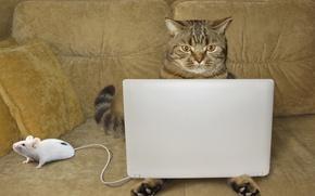 Обои кот, мышка, ноут