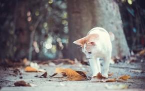 Обои кошка, боке, кот, котёнок, осень, листья