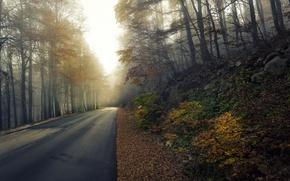 Обои дорога, осень, туман