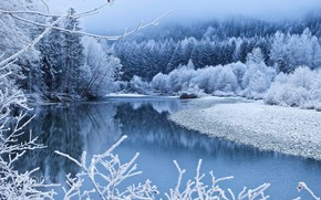 Обои лес, река, ветки, синева, берег, деревья, туман, зима, снег