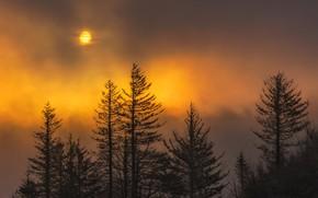 Обои Луна, деревья, Орегон, облака, США