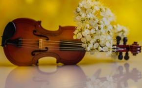 Обои весна, скрипка, лепестки, цветы