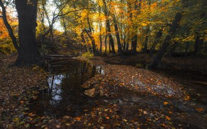 Обои осень, лес, вода, деревья, ручей, листва, оренбуржье