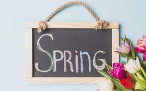 Картинка цветы, яркие, букет, весна, рамка, colorful, тюльпаны, доска, fresh, flowers, tulips, spring, bright