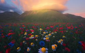 Картинка лето, облака, цветы, горы, природа