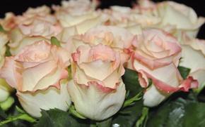 Картинка розовые розы, букет роз, нежные цветы