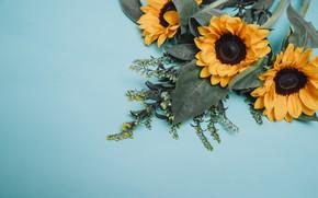 Картинка зелень, цветы, подсолнух, букет