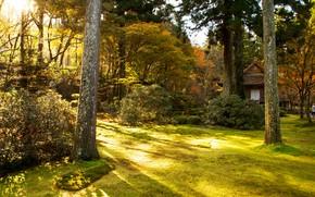 Картинка осень, трава, солнце, деревья, парк, Япония, Киото, кусты