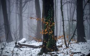 Обои зима, лес, снег, дымка