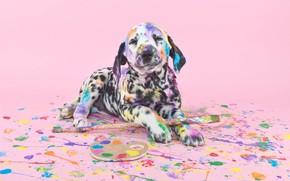 Картинка краски, собака, кисти