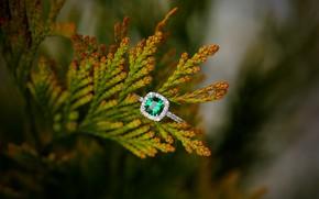 Картинка камень, ветка, кольцо, украшение, изумруд