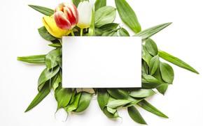 Картинка цветы, букет, тюльпаны, leaves, tulips, paper, sheet