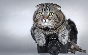 Картинка Кот, Фотоаппарат, Серый
