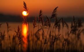 Картинка пейзаж, закат, природа, камыши