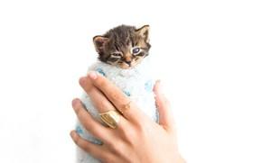Картинка котенок, полотенце, руки