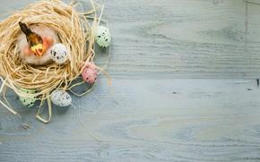 Картинка яйца, Птица, пасха, солома, Праздник, Гнездо, православный праздник