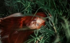 Картинка трава, девушка, лицо, настроение, веснушки, рыжая, рыжеволосая, длинные волосы, Ronny Garcia, конопатая, Alison Sobarzo Ormeno