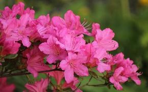 Картинка Весна, Spring, Цветение, Pink flowers, Flowering