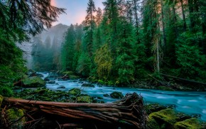 Обои зелень, лес, деревья, туман, ручей, камни, мох, утро, США, Скайкомиш, Skykomish