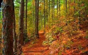 Картинка Тропинка, Деревья, Лес, Fall, Листва, Autumn, Colors, Forest, Leaves