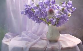 Картинка цветы, стол, ромашка, фиолетовые, ваза, колокольчики, занавеска, тюль
