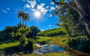 Обои зелень, лето, трава, солнце, облака, деревья, ручей, пальмы, Франция, лучи солнца, кусты, синее небо, Reunion, ...